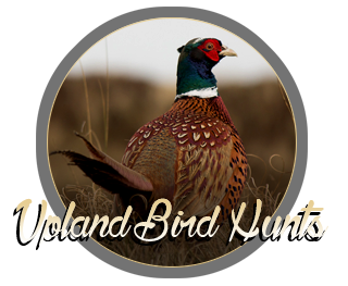 mn-upland-bird-hunts